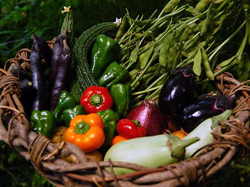 モナの丘の野菜