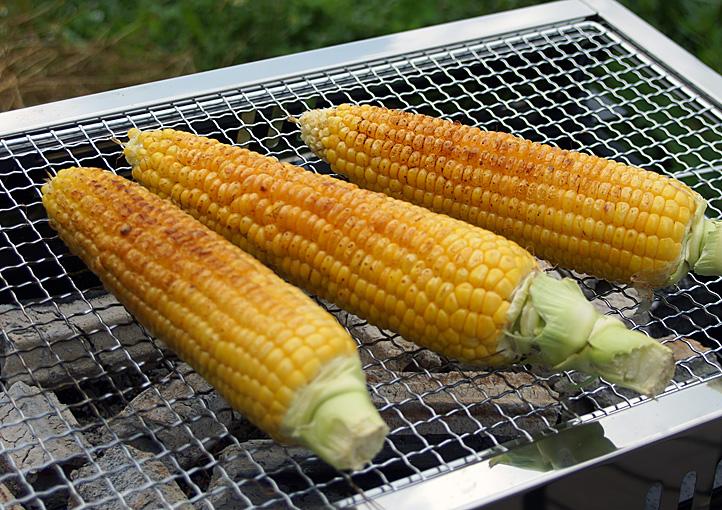 収穫体験トウモロコシ
